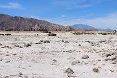 Salton Sea, California (russ david) Tags: salton sea california ca travel beach abandoned april 2019 landscape lake
