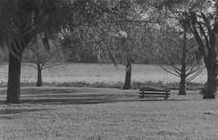 The bench near the lake (Rafael Baptista) Tags: mamiya150mmf35 mamiyam645 sekorc150mmf35