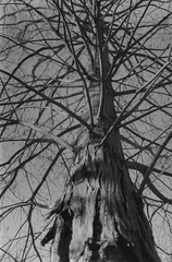 Nake Tree (Rafael Baptista) Tags: mamiyam645 mamiya sekorc150mmf35
