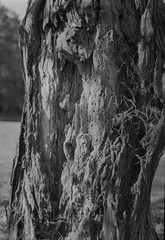 Tree Detail (Rafael Baptista) Tags: sekorc150mmf35 mamiya mamiyam645 mamiya150mmf35