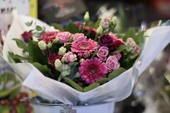 Bouquet     T-Planar 85mm F 1.4 (情事針寸II) Tags: flowers stilllife colours bokeh bouquet contaxyashicalens tplanar85mmf14 flowerscolors