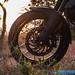 KTM-390-Adventure-11