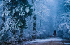 In the forest (ceca67) Tags: wald nature winter frost ride horse forest outdoor