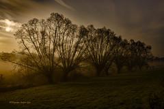 2020-1-26 mist Landschap 112 aa Kopiëren © (Jacques Sper) Tags: mist morgenstond morning fog kleur color canon outdoor oostvlaanderen jacques sper bomen trees k