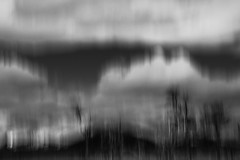 Proud land (.KiLTЯo.) Tags: kiltro cl chile blur motion movement bw blackandwhite tierradelfuego magallanes patagonia trees nature art