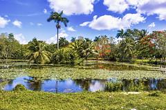 Marais de Zapata ( Philippe L PhotoGraphy ) Tags: cuba amérique 19emearrondissement paris rivedroite capitale 19eme quartier maraisdezapata matanzas