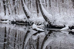 Mirror of winter (Elena Lebedeva) Tags: winter snow reflection forest trees river nature landscape sestroretsk russia outdoors
