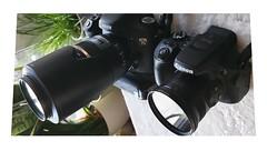 i love both (eagle1effi) Tags: canonpowershotsx70hsds canon7dmki dslr bridgecameracanonsx70hs 7d eagle1effi excellent photo canoneos7d eos7d canon7dmarki 7dbest bestof mygear ausrüstung geräte camera kamera owner 2020 canon7d canon snappy snapshot schnellschuss imkasten foto toll tolle photos fotos bild bilder