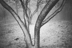 Winter Trees (Gabriella Ollandini) Tags: trees snow winter nature frost cold freezing bw filmisnotdead filmphotography film filmcamera outside landscape analog analogue analogica monochrome contrast texture trunk branches vintage view lomo lca ilford hp5 35mm ice stillness bare blackandwhite