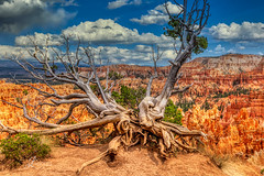 Bryce Canyon in Southern Utah (JuanJ) Tags: nikon d850 lightroom photoshop luminar art bokeh lens light landscape happy naturephotography nature people white green red black pink skyportrait location architecture building city square squareformat instagramapp shot awesome supershot beauty cute new flickr amazing photo photograph fav favorite favs picture me explore interestingness friends dof sunset sky flower night tree flowers portrait fineart sun clouds brycecanyon utah trees fx nikonphoto