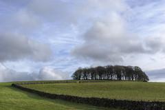 CopseSkyline (Tony Tooth) Tags: nikon d600 nikkor 50mm f18g copse trees skyline sky cloud countryside wall england biggin derbyshire