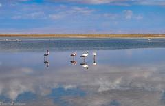 The mirror of Atacama / Зеркало Атакамы (Vladimir Zhdanov) Tags: travel chile atacama desert nature landscape lake water chaxalagoon andes mountainside sky clouds birds flamingo phoenicoparrusjamesi