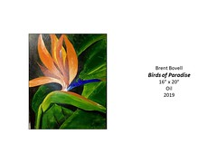 """Birds of Paradise • <a style=""""font-size:0.8em;"""" href=""""http://www.flickr.com/photos/124378531@N04/49451256446/"""" target=""""_blank"""">View on Flickr</a>"""