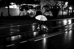 With the little dog (pascalcolin1) Tags: paris13 homme man nuit night lumière light reflets reflection parapluie umbrella chien dog wheelchair fauteuilroulantpluierainphoto de ruestreet viewurban artenoir et blancblack whitephoto pascal colin50mmcanon 50mm canon