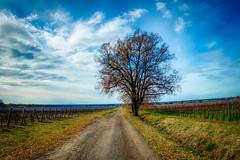inverno (lotti roberto) Tags: bolgheri toscana sky tuscany italy tree winter route field inverno fav25