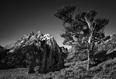 Tetons (www.dkwatkins.com) Tags: tetons grand mountains tree davewatkins watkins