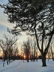 coucher de soleil..... (angelinas) Tags: coucherdesoleils tramonto sunset atardecer trees park wintermood serene hiver invernno outdoors scenic nature light lumiere sunlight montrealquebec canada arbres arbelo