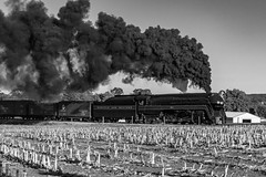 Steam and Sweet Light in Black & White (Vincent Colombo) Tags: monochrome freight steam locomotive smoke black old train farm nw boxcar j class northern williamstown paradise pennsylvania united states america