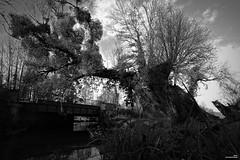 L'eau coule sous les ponts. (Un jour en France) Tags: rivière arbre pont canoneos6dmarkii canonef1635mmf28liiusm noiretblanc noiretblancfrance hiver cielpaysage landscape black