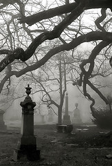 "Cincinnati - Spring Grove Cemetery & Arboretum ""Foggy Morning At Old Oak Tree"" (David Paul Ohmer) Tags: cincinnati ohio spring grove cemetery arboretum fog oak tree"