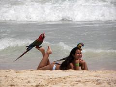 DSCN8903 (alainazer) Tags: puntacana dominicana eau acqua water océan oiseau bird perroquet parrot pappagallo animal plage beach playa spiaggia