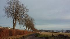 Trees, Avoch, Black Isle, Jan 2020 (allanmaciver) Tags: trees avoch black isle highlands grey day road farmland colours allanmaciver