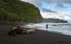 Pololu Surfers_27A8321 (Alfred J. Lockwood Photography) Tags: morning people surfer hawaii tropicalforest blacksandbeach bigisland pololu landscape seascape travel water ocean sea surf waves winter alfredjlockwood