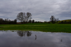 Wet and gray in Denmark
