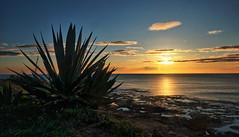 A lovely morning (Vest der ute) Tags: xt2 sea seascape foliage sky clouds rocks sunrise fav25