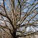 Tree, Nashville 1/24/20