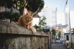 猫 (fumi*23) Tags: ilce7rm3 sony sel35f18f street a7r3 animal alley cat chat bokeh neko gato feline fe35mmf18 emount 35mm ねこ 猫 ソニー