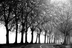 The runner (jaume zamorano) Tags: blackandwhite blancoynegro blackwhite blackandwhitephotography blackandwhitephoto bw boira brouillard catalunya d5500 fog foggy ground gente lines monochrome monocromo mist noiretblanc nikonistas niebla pov people road street streetphotography streetphoto streetphotoblackandwhite streetphotograph tree view