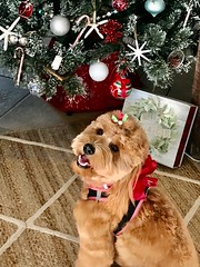 Maggie is ready for Santa