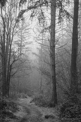 The Way (shawn~white) Tags: ©shawnwhite fujifilmxt2 calm beautiful beauty dreamy enchanting elegance harmonious magical moody nostalgia relaxing reminiscing reminisce serene serenity softlight vintage wonder ceredigion blackcovert westwales uk fujinonxf1655f28rlmwr grain filmlook bw blackandwhite woodland conifer coniferous deciduous forest forestry tree trees wood woods