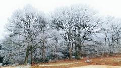 La forêt givrée -3- (mamietherese1) Tags: earthmarvels50earthfaves world100f