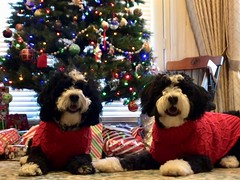 Minnie and Buddy ready for Santa