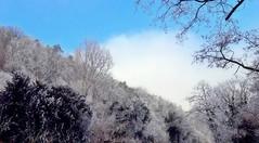 La forêt givrée -1- (mamietherese1) Tags: earthmarvels50earthfaves world100f