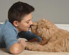 Ginger giving kisses