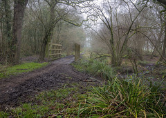 Crossing point (Through Bri`s Lens) Tags: sussex ashurst spithandlelane forest woods winter brianspicer canon5dmk3 canon1635f4 mist