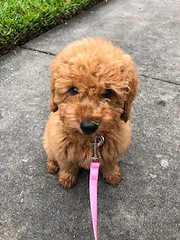 Lucy out for a walk