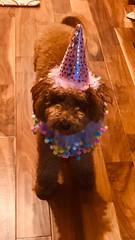 Sadie's 1st birthday