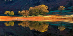 Into the light (images@twiston) Tags: bleatarn trees copse tree golden intothelight frost tarn lake cumbria lakedistrict lakeland nationalpark backlight green landscape imagestwiston still water reflection reflections dawn calm serene greatlangdale littlelangdale unesco worldheritagesite
