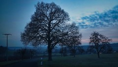 Blaue Stunde - Twilght | IMGP9053xx (2) (horschte68) Tags: blauestunde bluehour twilight tree baum pentaxkp smcda1645mm40edal polfilter polarizer outside aussen nature nightshot cloudysky panorama view pointofview outlook outdoor januar january composition bildaufbau longexposure langzeitbelichtung freiröttenbach wideangle weitwinkel