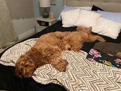 Dooley & Lucy
