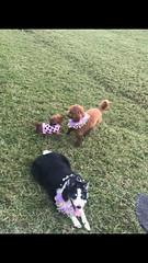 Sadie's birthday party friends