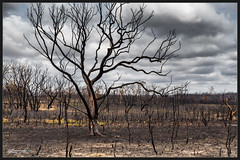 Burned (itsallgoodamanda) Tags: amandarainphotography australia australianphotography australianlandscape australiassouthcoast australianbush australiaseastcoast itsallgoodamanda photography photoborder landscape landscapephotography sky destroyed burntlandscape burntbush burnttrees burnedlandscape burnedtrees shoalhaven afterthebushfire australianbushfires summer2020 bushfireaftermath