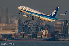 MAK-4135 (oga_mak) Tags: makogawauchi ogamak 東京都 日本 500mm eos eos1dxmarkii canon myeosphoto airport aircraft airplane aviation boeing b738 boeing737800 boeing737 airways allnipponairways hanedaairport hikoukiclub everybodyphoto キヤノン 羽田空港 飛行機撮り隊 飛行機大好き 飛行機写真 飛行機のある風景 飛行機倶楽部 飛行機 写真好きな人と繋がりたい カメラ好きな人と繋がりたい エビフォト mytokyois