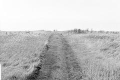 20190901_hp5_f5_14 (onebellboy) Tags: onebellboy wholerollproject wwwellsworthbellcom pentax me 50mm f17 ilford hp5 diafine kodafix nikonsupercoolscan4000 nosehill park calgary alberta monochrome outdoors landscape rain drizzle grey