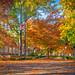 1 1 fall trees-4