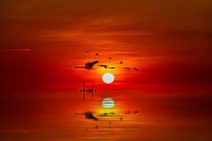 mindil beach sunset (Greg M Rohan) Tags: nikon nikkor d7200 sun boat mindilbeach sunset red orange reflection birds nt darwin northernterritory creativeart